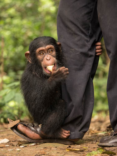 globio great apes 2020 education