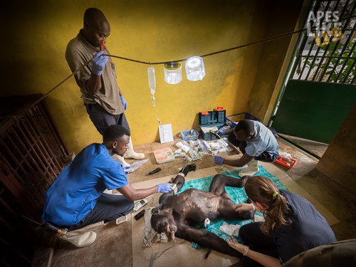 Donated LUCI Lights helping shed some light on a delicate surgery in a chimpanzee enclosure at Tacugama Chimpanzee Sanctuary in Sierra Leone. & LUCI Light Project | GLOBIO | Where Kids Discover the World