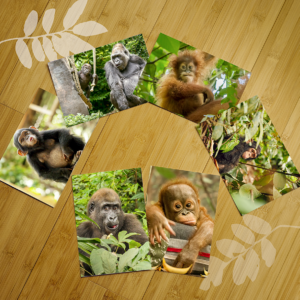 Great Ape Notecard Set