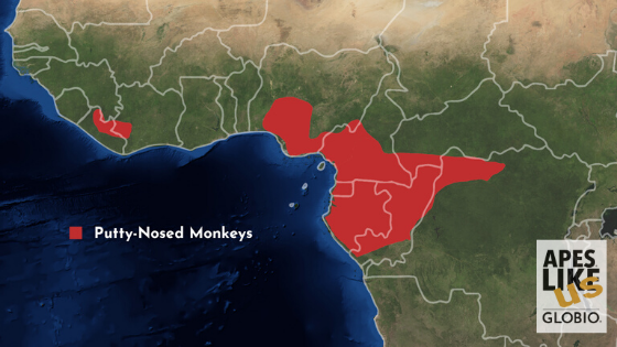 Putty-Nosed Monkey Range Map