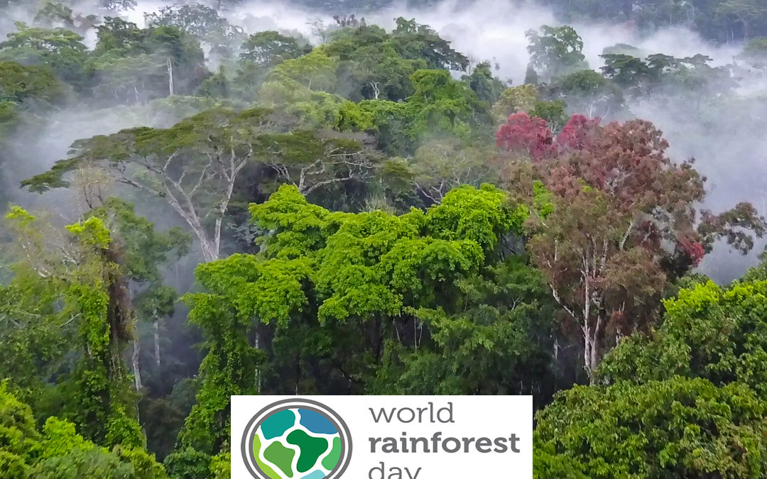 World Rainforest Day — Seeing Rainforests For More Than Their Trees
