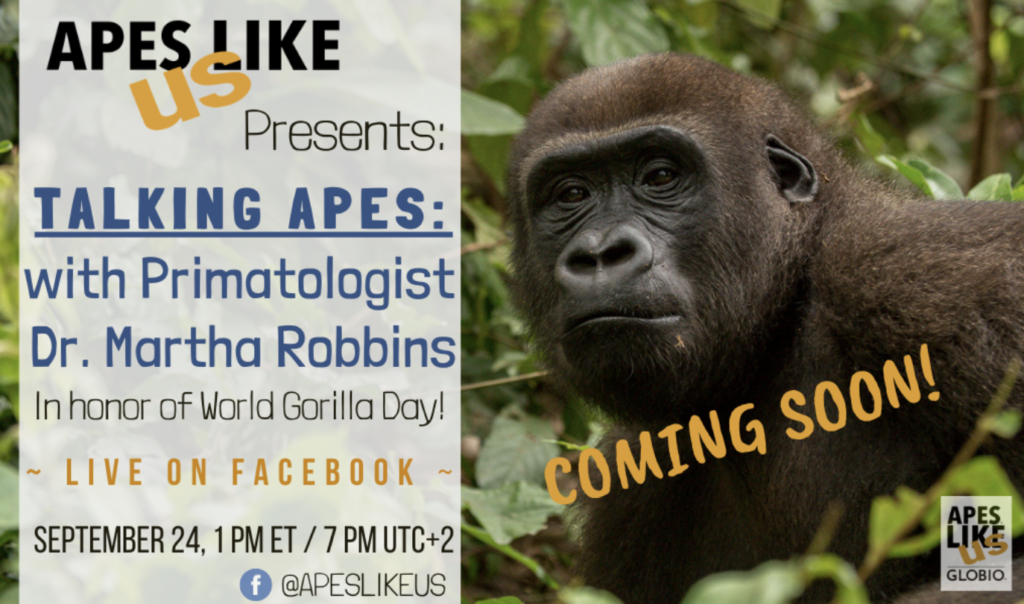 Talking Apes World Gorilla Day