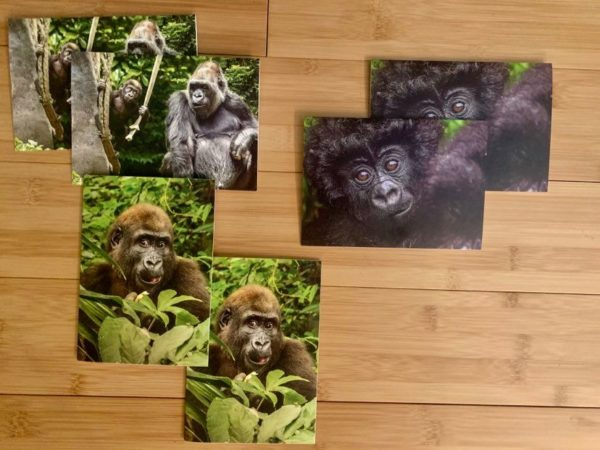 Baby Gorilla Notecards Set