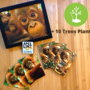 OTP Package: photo print, baby orangutan notecards, ALU sticker and 10 trees