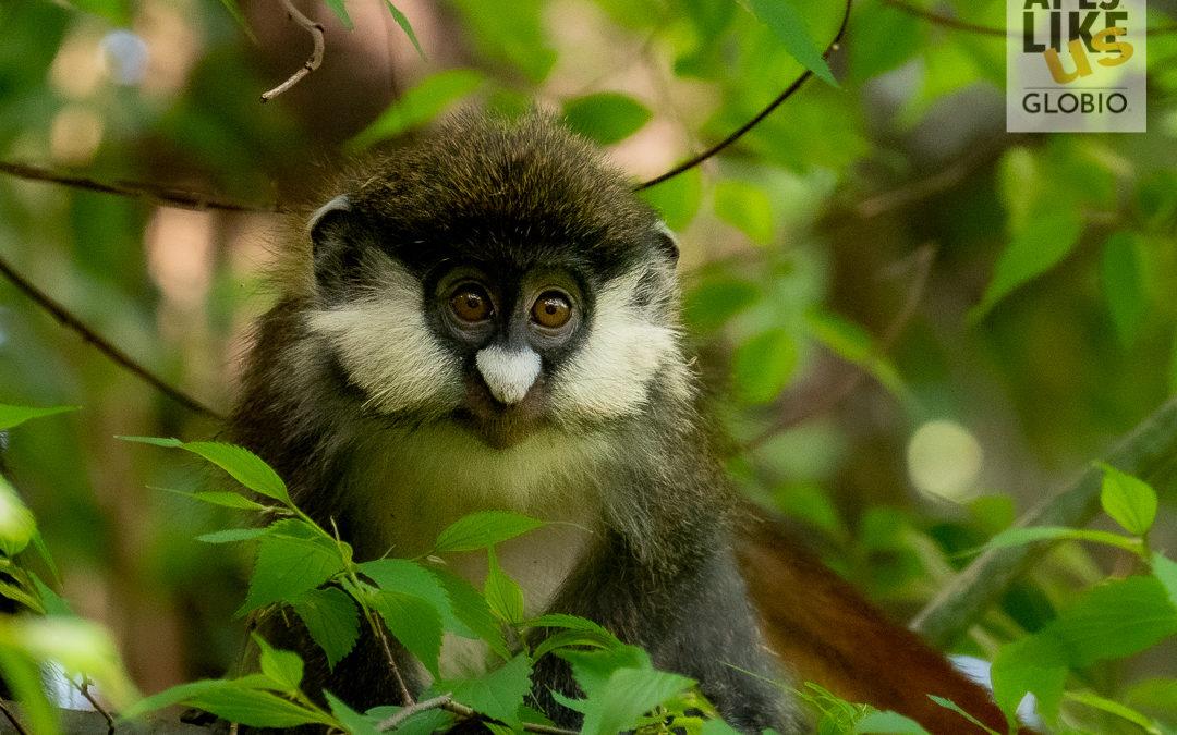 Travel with GLOBIO — Monkey Magic