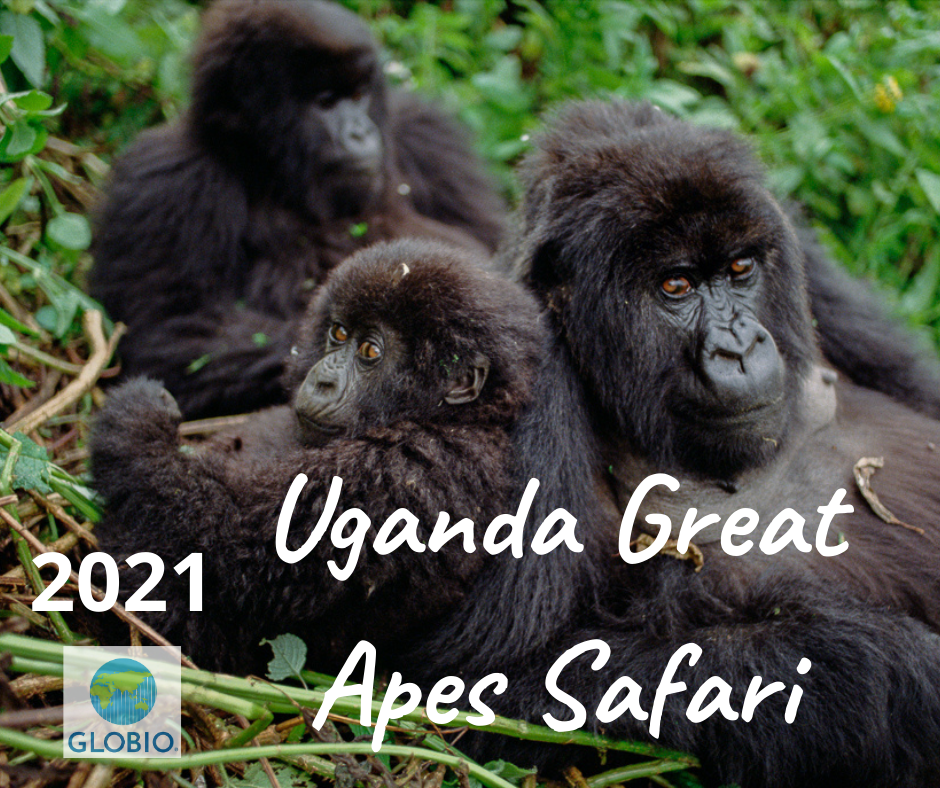 Uganda Great Apes Safari 2021
