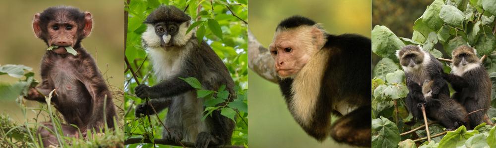 World Monkey Day PotM Banner