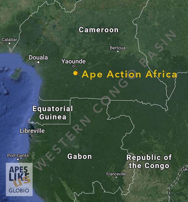 GLOBIO's Western Congo Basin Focal Region