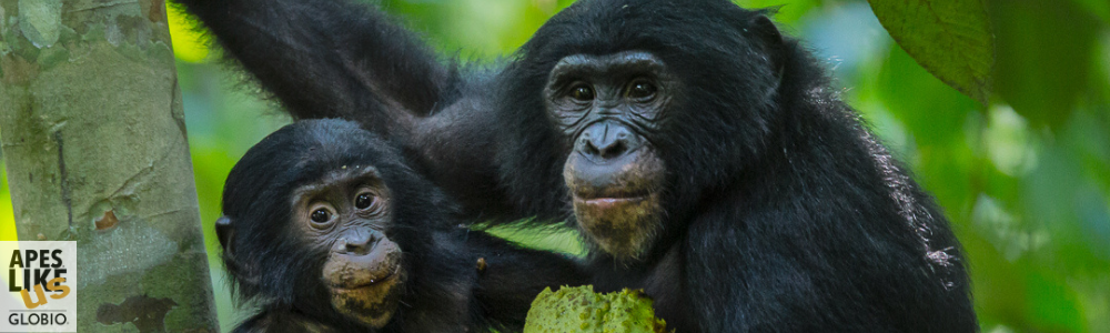 February Primate of the Month – Bonobo